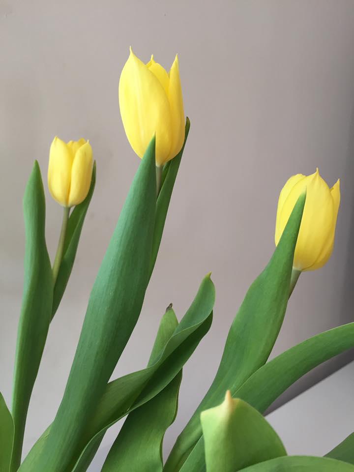 Energetix - Hilde Schoonjans - Lokeren - tulpen