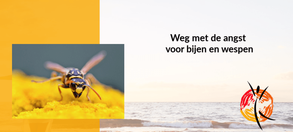 Weg met de angst voor bijen en wespen