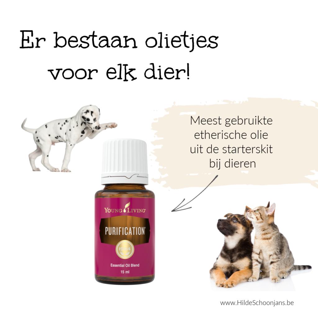 Etherische olie voor een huisdier voor je kind