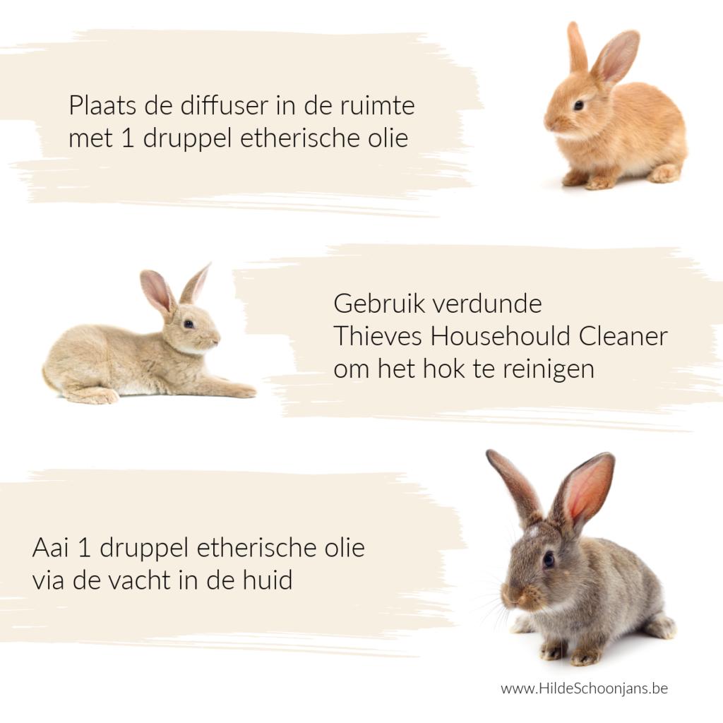 Schattige konijntjes als huisdier
