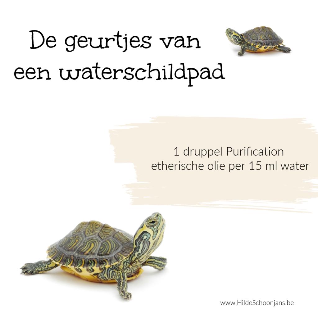 Waterschildpad houden als huisdier - tips onderhoud